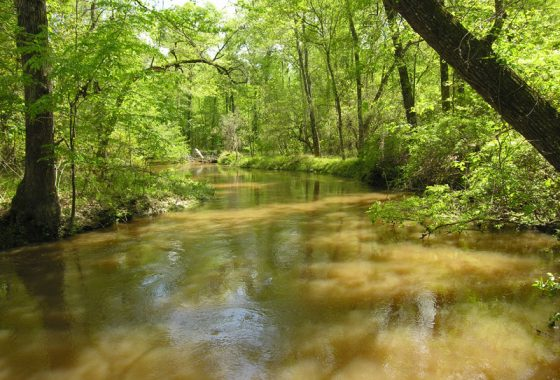 Land for Sale in Georgia | Hunting Land, Farmland